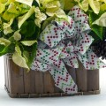 poinsettia_white_planter_step15-500px-04