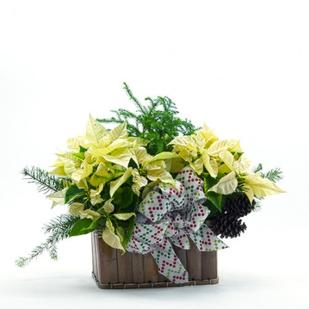 poinsettia_white_planter_step15-500px